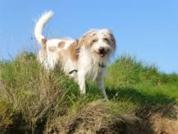 Mittelgroße Hunderassen mit Bildern und Beschreibungen