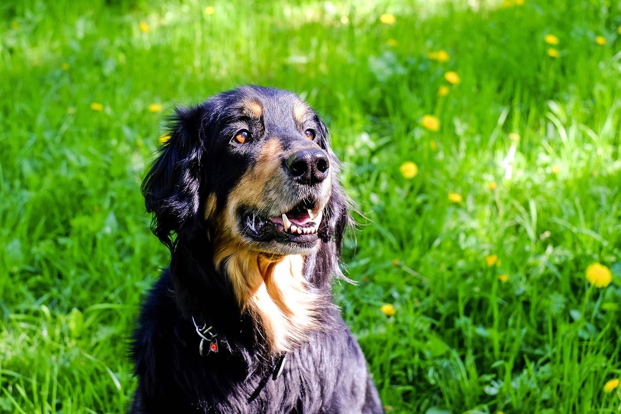 hund dunkle flecken im fell