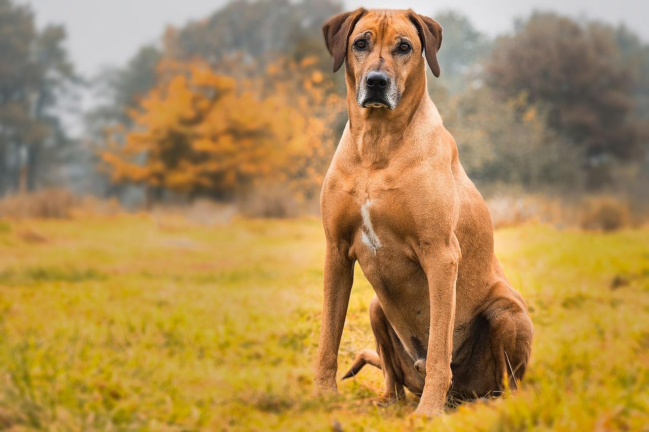 Sloghi Dog Breed