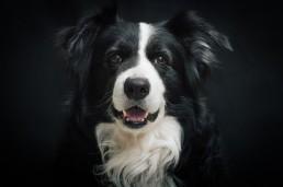 Fluffis.de - der Hundeblog mit zahlreichen Informationen und Bilder