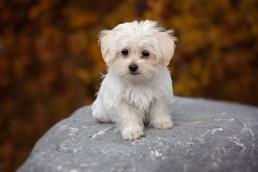 Kleine Hunderassen sind sehr beliebt in Deutschland