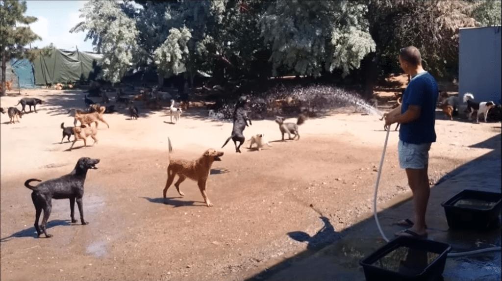 Alle_Hunde2