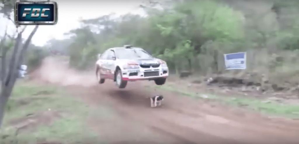 Eine Bodenwelle rettete den Hund