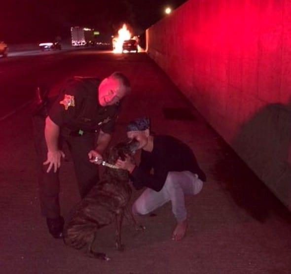 Dieser Sheriff rettete eine Hündin aus einem brennenden Autowrack