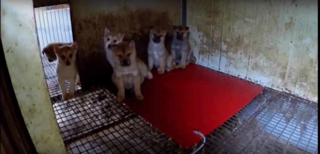 Die Hunde wurden in Käfigen gehalten