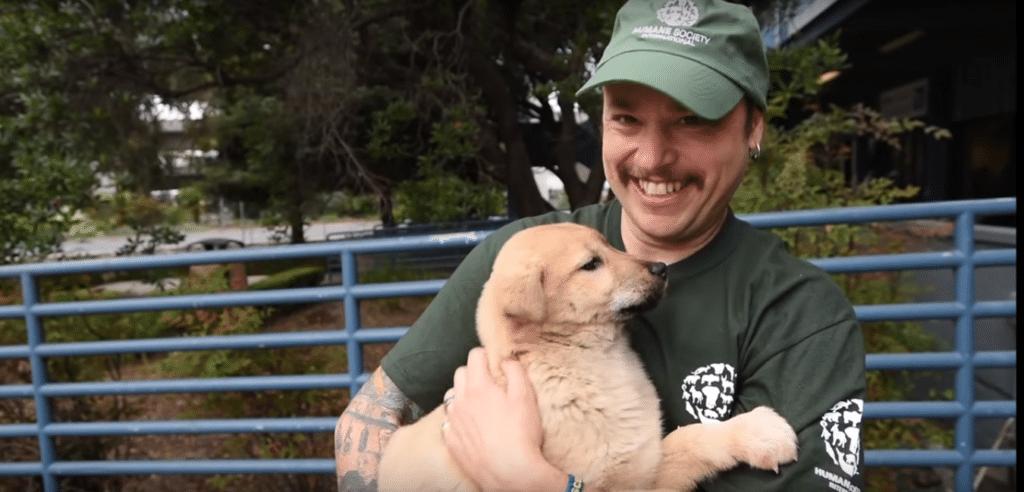 Die Hunde wurden aus den Händen der Fleischindustrie gerettet