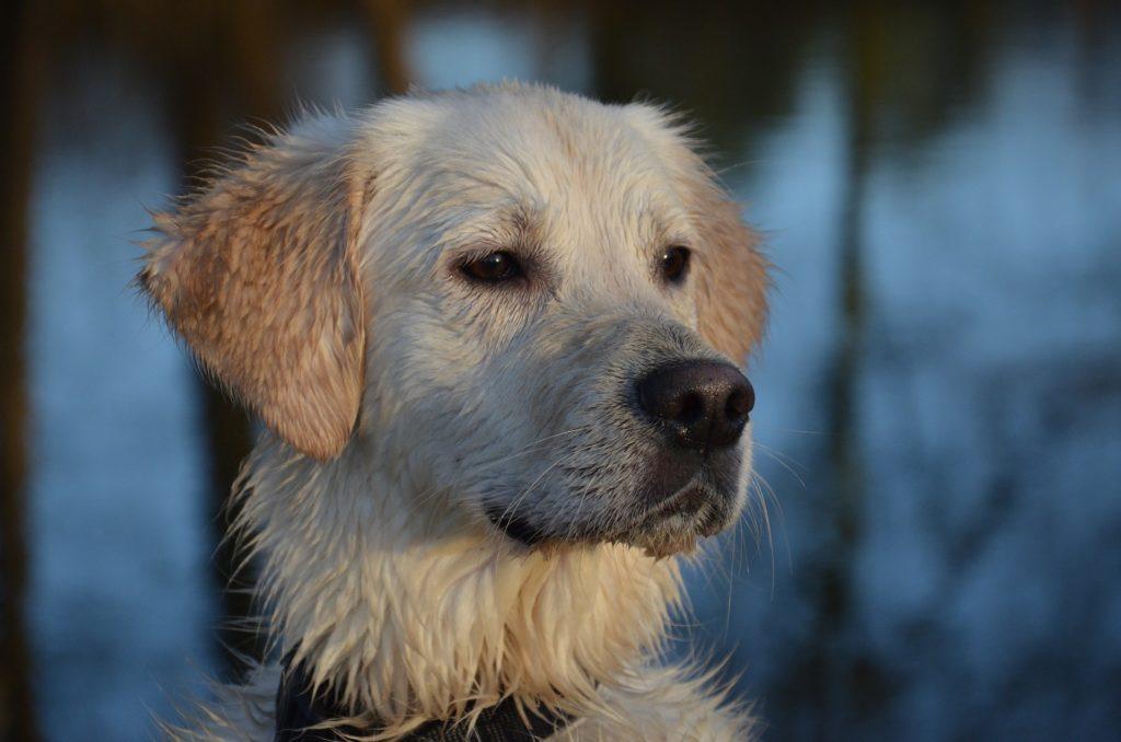 DIeser Hund rettete eine ganze Familie