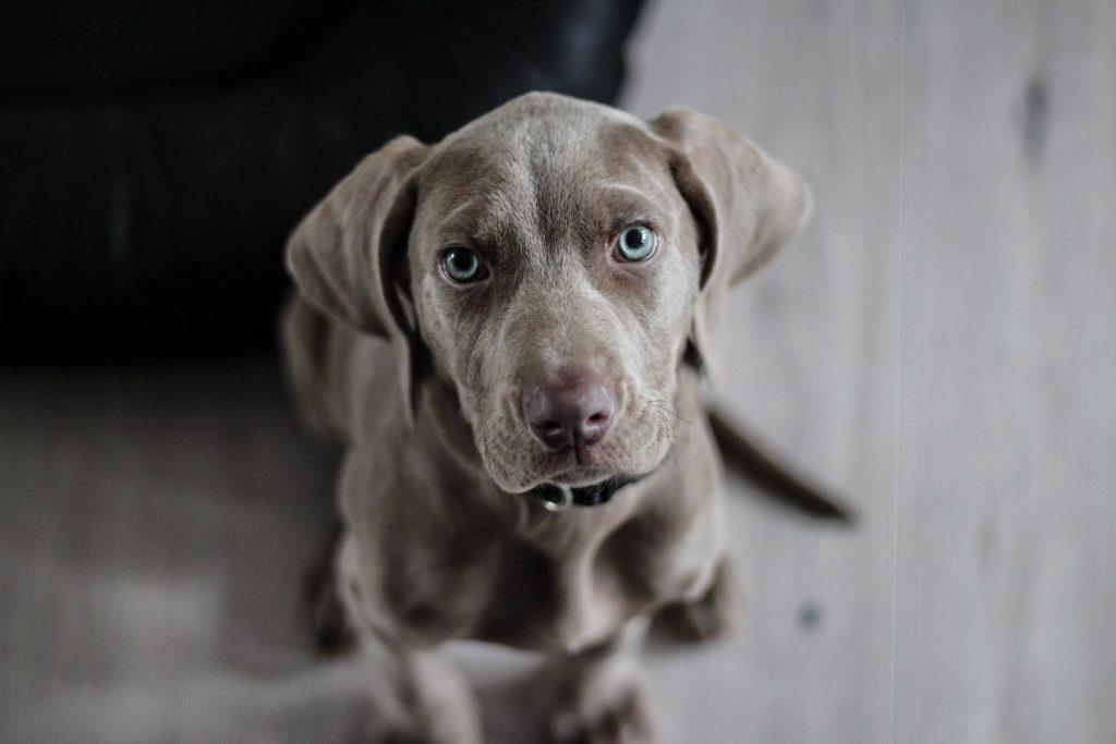"""Die Frage """"Wie alt werden Hunde?"""" beschäftigen viele Hundehalter."""