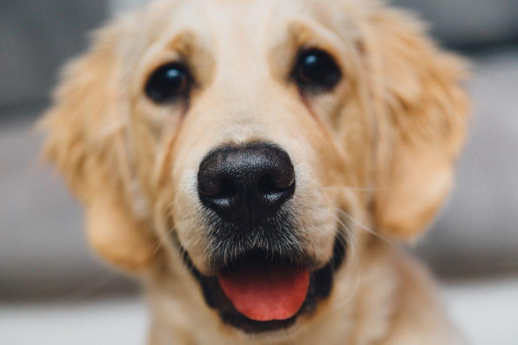 Hundesprachen Lecken kann viele Bedeutungen haben.