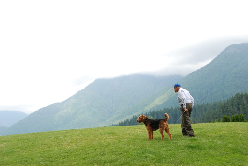 Auch der Airdale Terrier gehört zu den Hunderassen die nicht haaren
