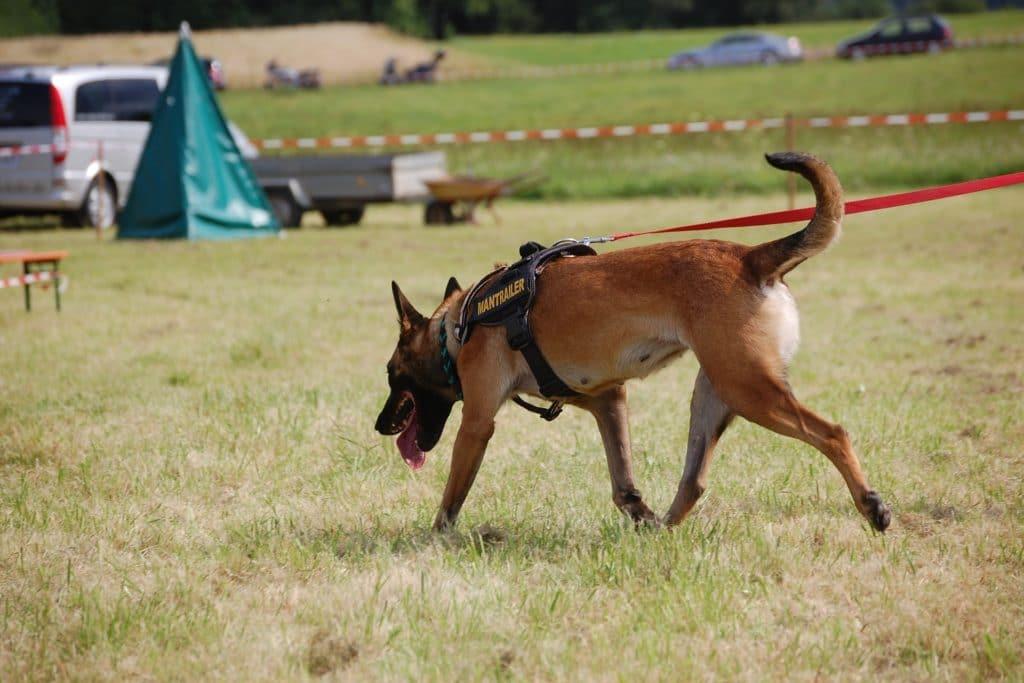 Ein Suchhund kann bei der Suche nach dem vermissten Hund unterstützen.