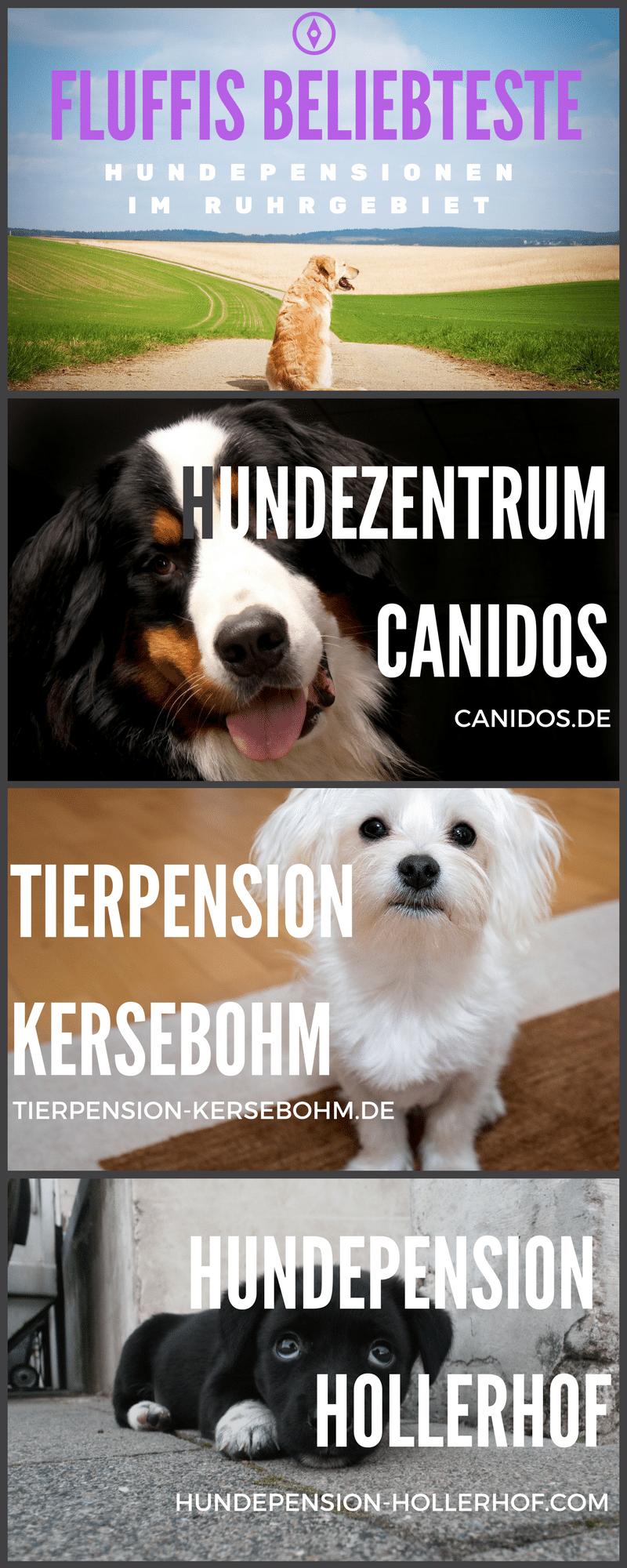 Infografik: Hundepension Ruhrgebiet