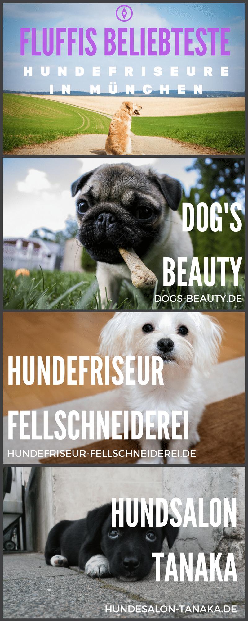 Hundefriseur München gesucht? Infografik gibt es hier.