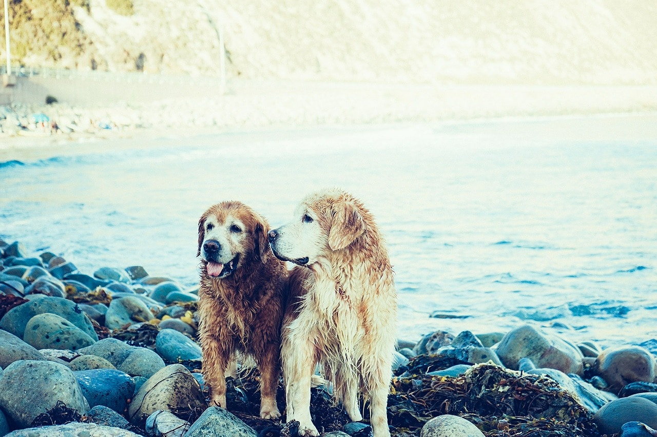 Verliebte Hunde fressen nicht gerne während ihrer Läufigkeit.
