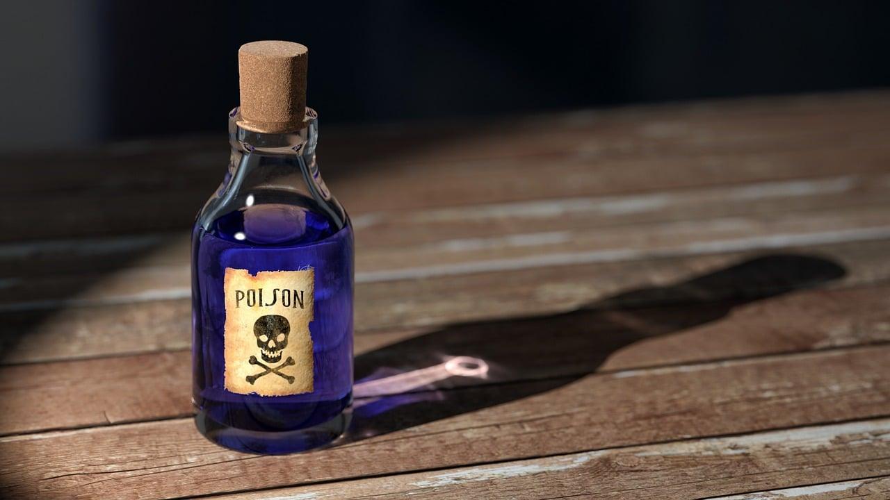 Eine Vergiftungkann bei Hunden zum Tod führen.