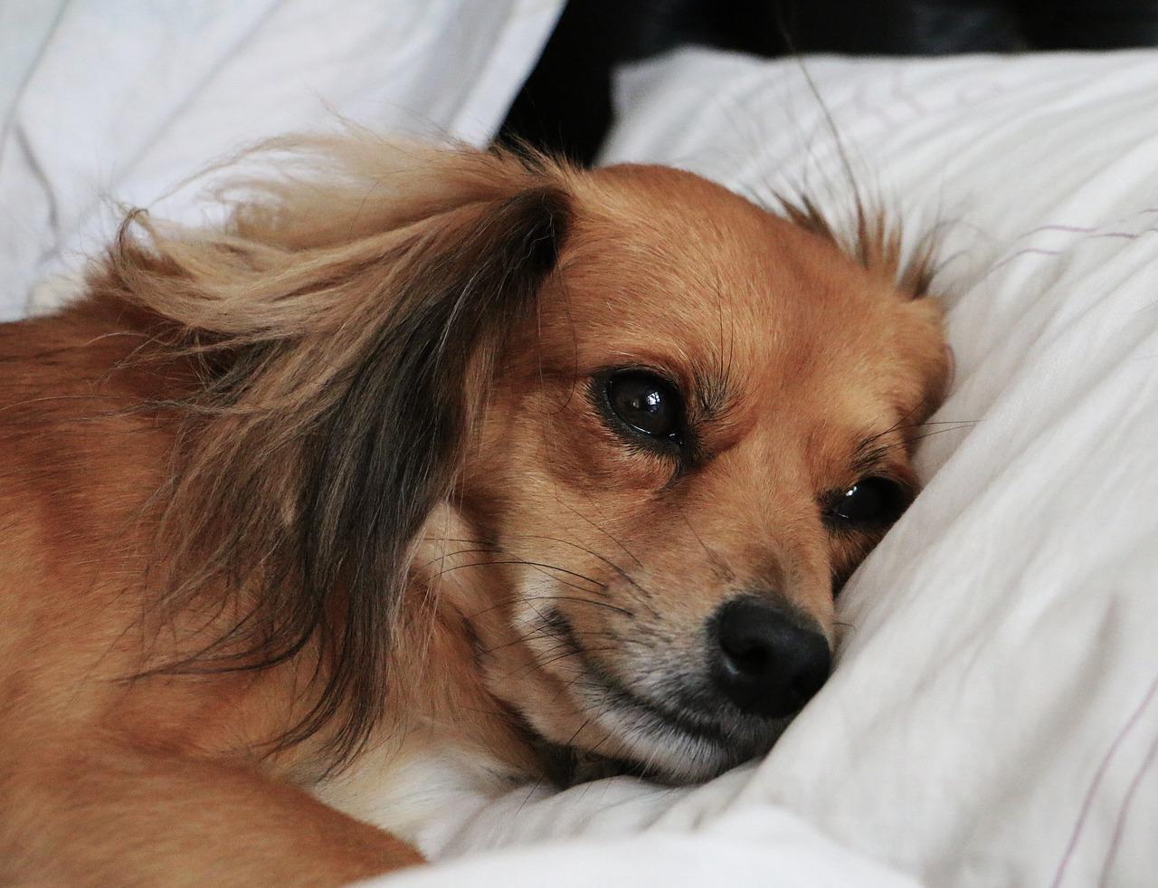 Auch traurige Hunde haben nicht den größten Appetit.