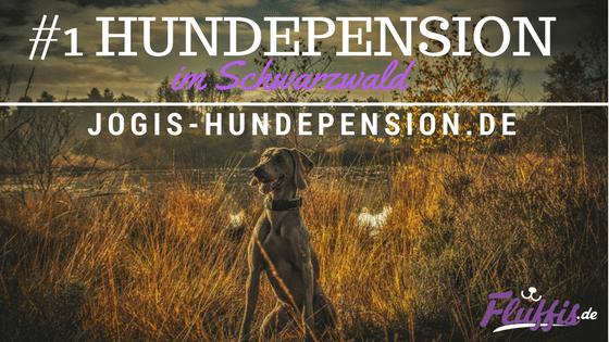 Hundepension Schwarzwald