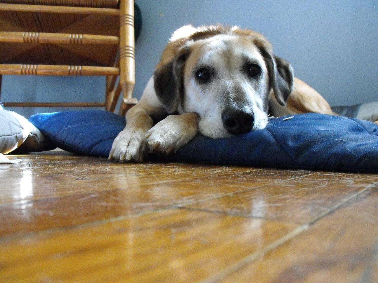 Den Hund alleine lassen - ein Rückzugsort kann helfen.