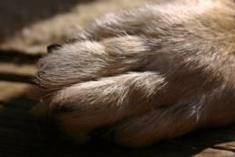 Krallen schneiden beim Hund ist einfach.