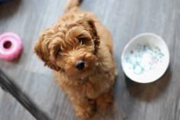 Ausgefallene Hundenamen sind sehr beliebt bei Hundehaltern.