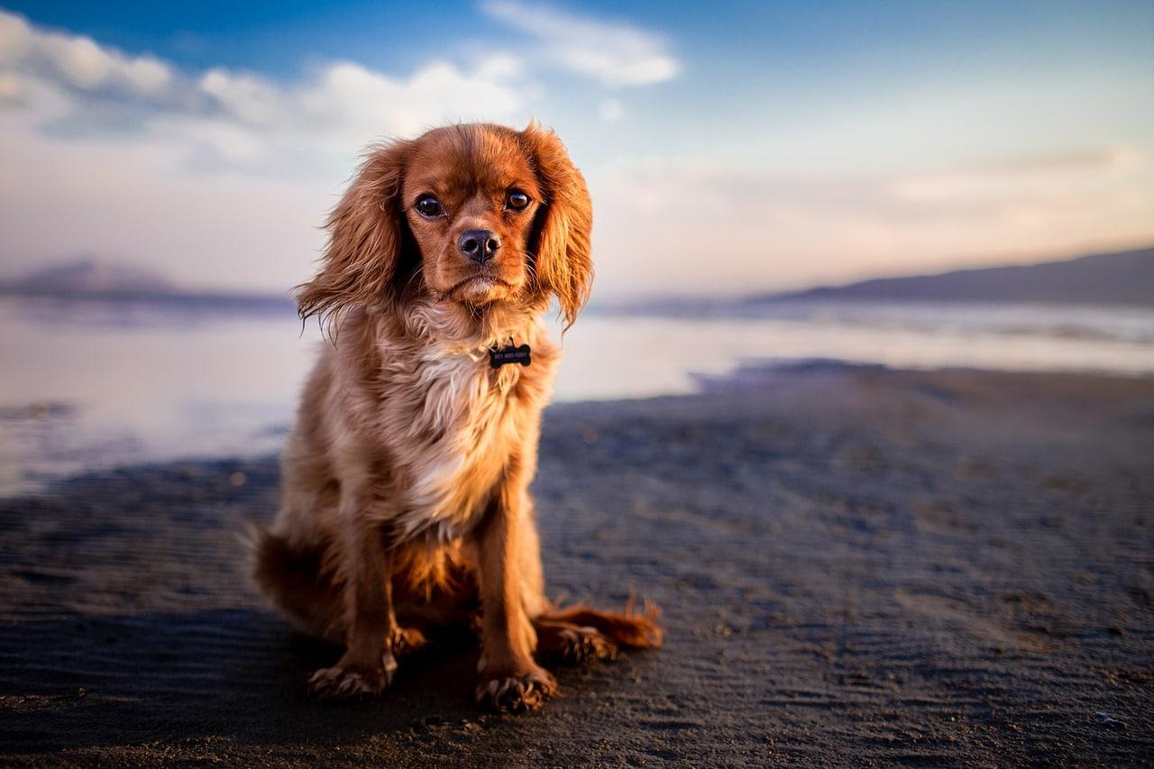 Am Strand von Californien fühlen sich Hunde wohl.
