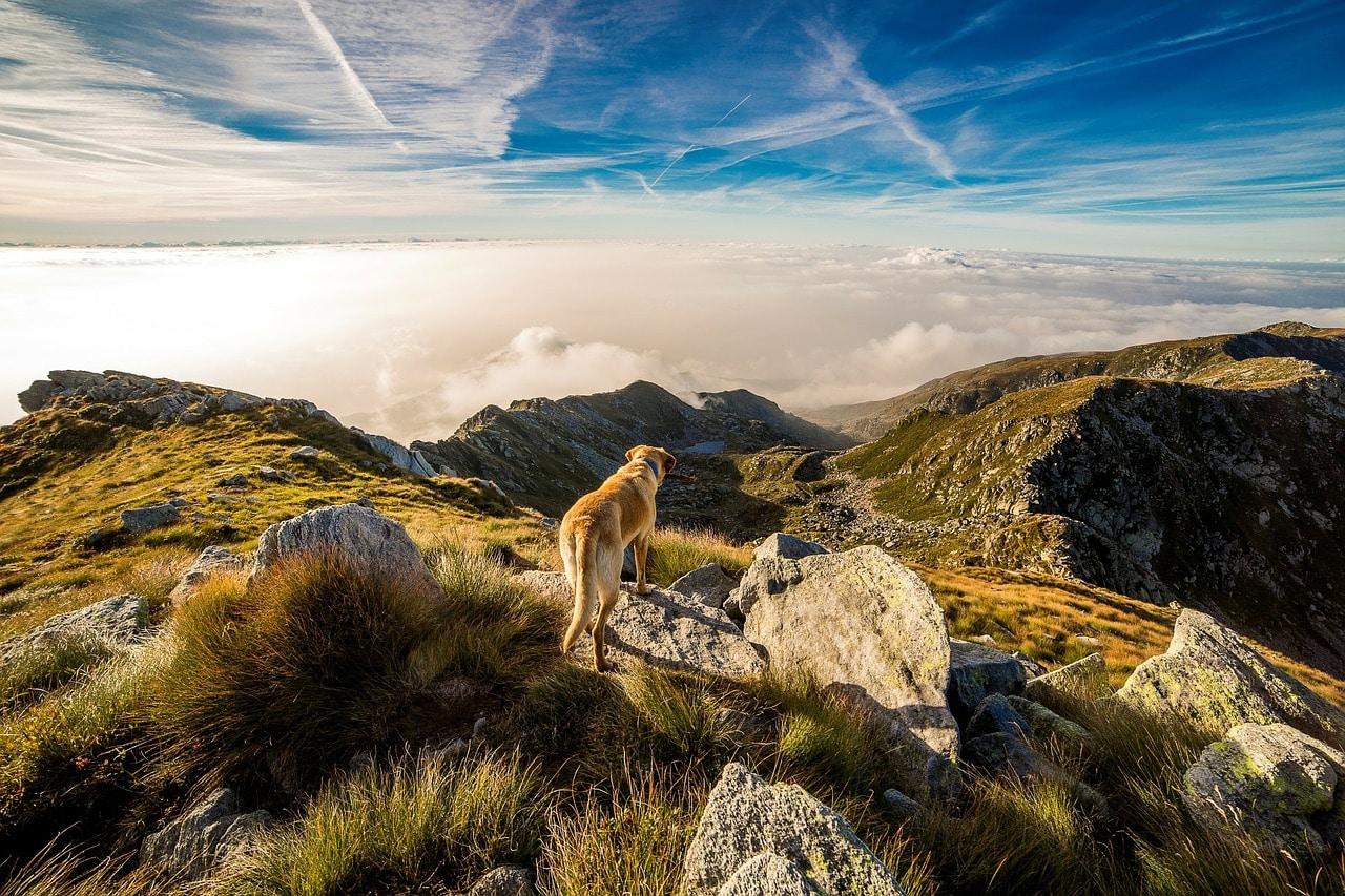 Das Allgäu eignet sich hervorragend für einen Urlaub mit Hund