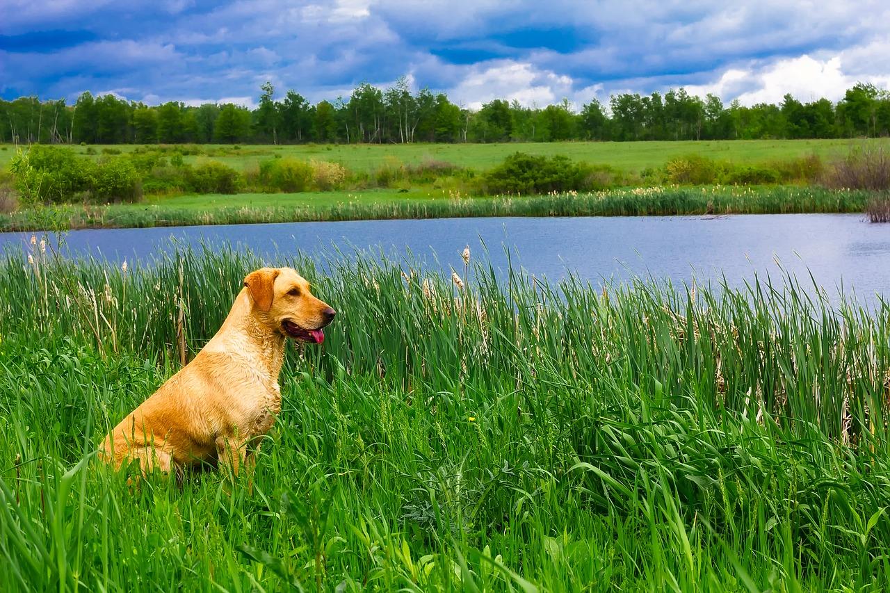 Die grünen Wiese in Ungarn laden zu einem perfekten Urlaub mit Hund ein.