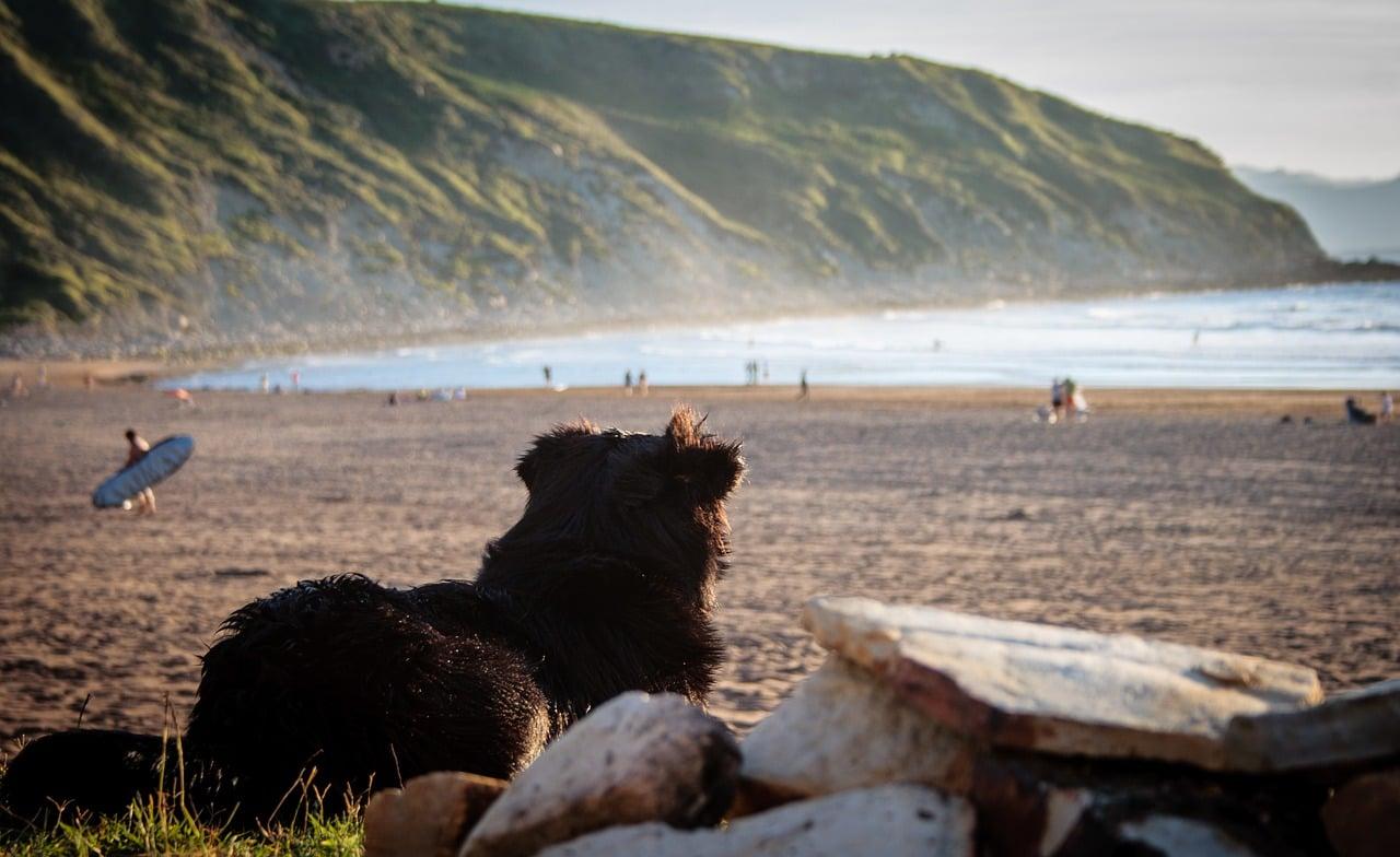 Auch am Strand an Spanien lässt sich die Zeit mit Deiner Fellnase genießen.
