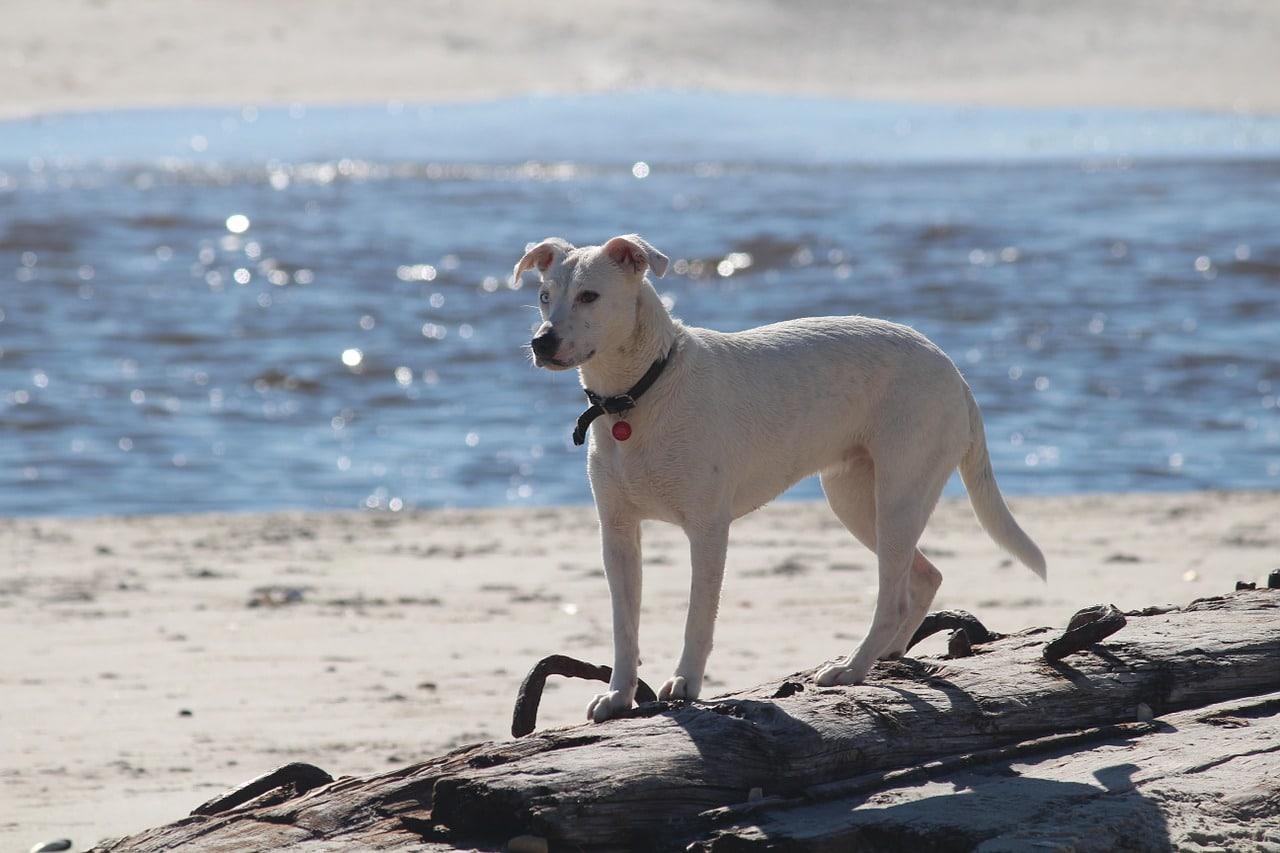 Bei Urlaub mit Hund in Südafrika sollte der lange Flug bedacht werden.