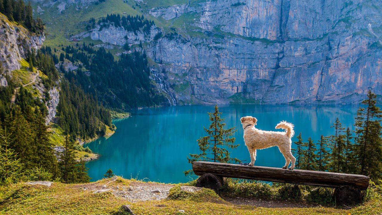 In Südtirol gibt es tolle Wanderwege für Hunde.