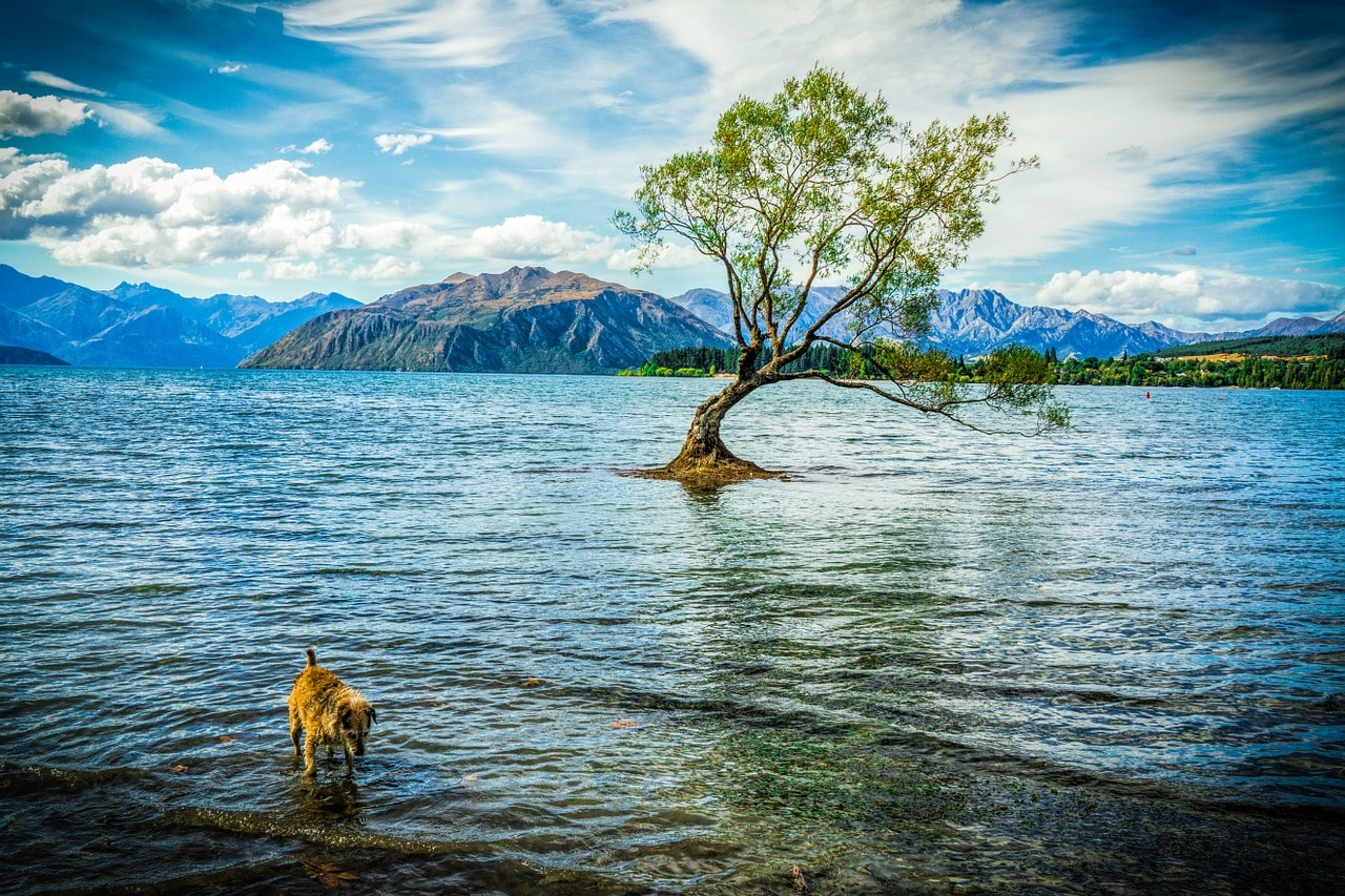 Auch in Neuseeland laden fantastische Landschaften zum Urlaub mit Hund ein.