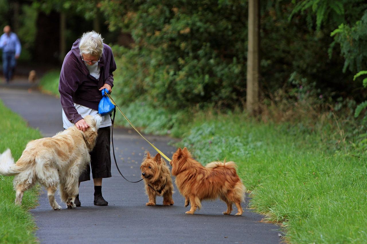 Der Australian Terrier liebt den Umgang mit Menschen.
