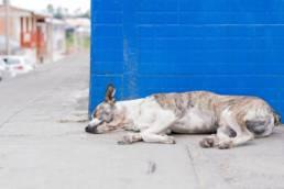 Milben beim Hund können Gesundheitsprobleme hervorbringen.