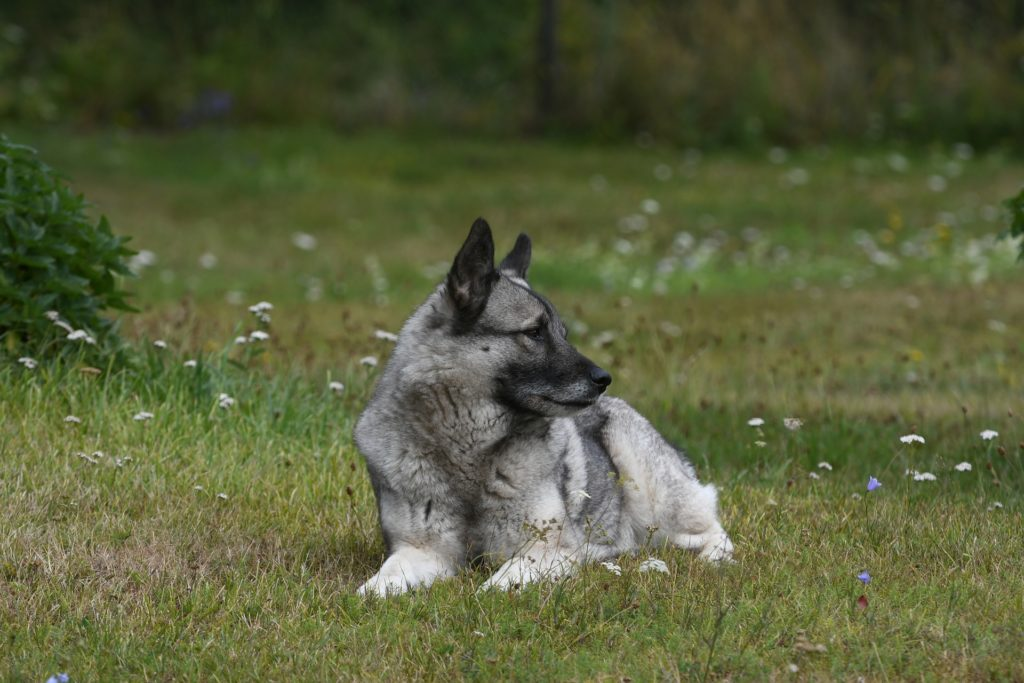 Kokosöl für Hunde gegen Zecken