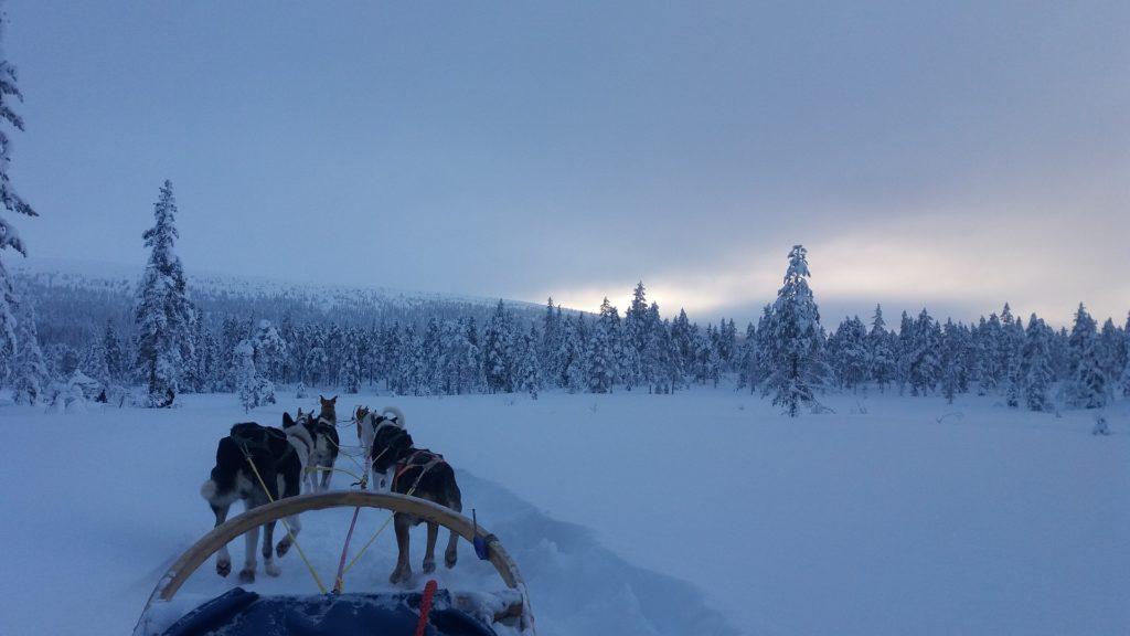 Urlaub mit dem Hund im Schnee