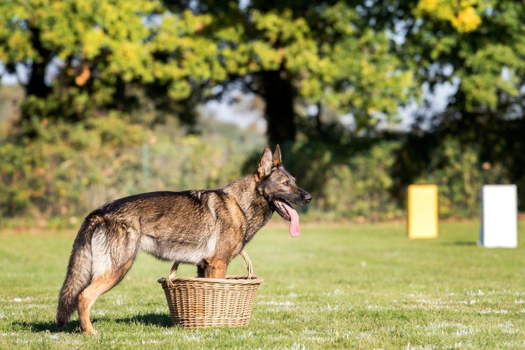 Transportkorb Hund - achte darauf, dass sie auch ins Auto passt