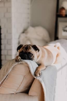 Hund frisst nicht mehr - Gründe